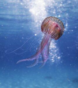 dykning_snorkling_ferie_rejse